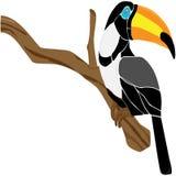 Tukan Schwarzweiss auf einer Niederlassung Lizenzfreie Stockbilder