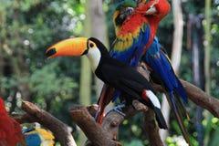 Tukan und Papageien Stockfotos