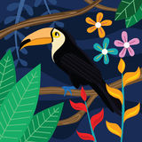 Tukan-Vogel-Vektor-Illustration im dunklen Hintergrund Lizenzfreies Stockfoto