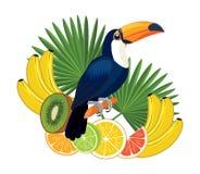 Tukanfågel och frukter också vektor för coreldrawillustration Royaltyfria Foton
