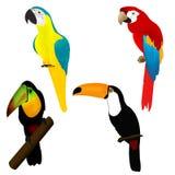 tukans för africa fågelpapegojor royaltyfri illustrationer