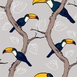 Tukans on trees Stock Photo