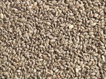 Tukmaria seeds (basil seeds) Stock Photography