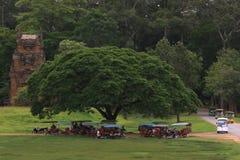 Tuks de Tuk bajo un árbol Imagenes de archivo
