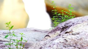 Green plant with waterfall in the background Stock Photo