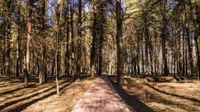 Tula Belousovsky park-skog i hjärtan av staden Royaltyfri Fotografi