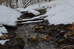 Tula. Forest Spring. Forest winter brook. Among woods and made his way winter creek. Tula source, knowledgeable people come here to gain a crystal-clear water Royalty Free Stock Images