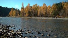 Tulameen-Fluss Autumn Colors, BC 4K UHD stock video
