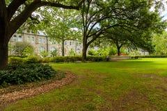 Tulane University photo stock