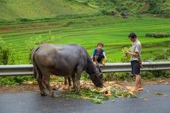 TULE, YENBAI, VIETNAM foto de archivo libre de regalías