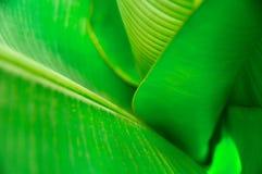 Tulejowa zieleń opuszcza palmy, odgórny widok Rostowy tło z selekcyjną ostrością Dla pokrywy, plakata, reklamy i dekoraci, obrazy royalty free