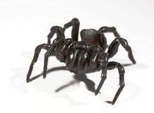 Tulejowej sieci pająk obrazy royalty free