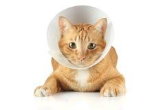Tulejowy kołnierza kot Zdjęcia Royalty Free