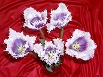 Tulipán 4 Fotografía de archivo libre de regalías