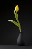Tulipán amarillo Foto de archivo libre de regalías