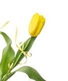 Tulipán amarillo con la cinta Imagenes de archivo