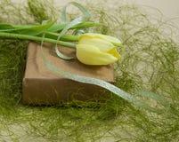 Tulipán amarillo de la primavera en un verde Imagenes de archivo