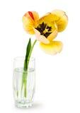 Tulipán amarillo en el florero de cristal Fotografía de archivo