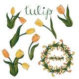 Tulipán amarillo y anaranjado aislado vector en blanco stock de ilustración