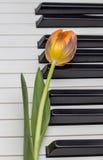 Tulipán anaranjado en llaves blancos y negros de un piano Imagenes de archivo