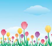 Tulipán colorido Fotografía de archivo libre de regalías