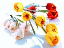 Tulipán de la flor aislado en el fondo blanco fotografía de archivo