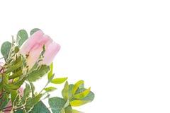 Tulipán delicado con las flores brillantes verdes Imágenes de archivo libres de regalías