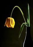Tulipán en florero Fotos de archivo libres de regalías