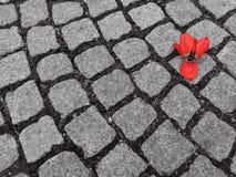 Tulipán en la tierra Fotografía de archivo