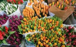 Tulipán en mercado Fotografía de archivo