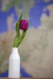 Tulipán en un florero Imagenes de archivo