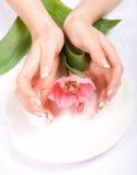 Tulipán en una placa Foto de archivo libre de regalías