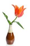Tulipán hermoso en un florero de cerámica Fotos de archivo