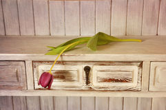 Tulipán púrpura Fotografía de archivo