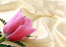 Tulipán púrpura rosado en una seda Foto de archivo