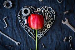 Tulipán rodeado por las nueces Fotografía de archivo libre de regalías