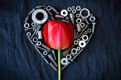 Tulipán rodeado por las nueces Foto de archivo