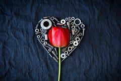 Tulipán rodeado por las nueces Imagenes de archivo