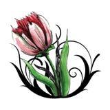 Tulipán rojo hermoso con remolinos Foto de archivo libre de regalías