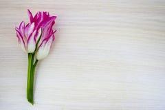 Tulipán, rosa blanco, en un fondo de madera ligero, espacio para el texto, visión superior Fotografía de archivo