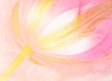 Tulipán rosado foto de archivo libre de regalías
