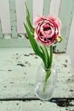 Tulipán rosado en una silla de madera Fotos de archivo