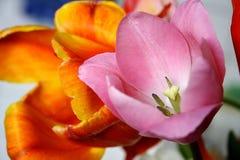 Tulipán rosado hermoso en un fondo floral borroso Fotos de archivo
