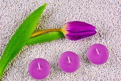 Tulipán saturado alto con la vela Imágenes de archivo libres de regalías