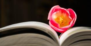 Tulipán y libros alumno, primavera, cuadrado de la primavera, aún, profesor, mundo, aroma Fotos de archivo libres de regalías