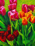 Tulip. Oil painting about the tulip Royalty Free Stock Photography