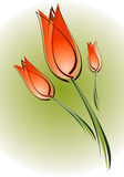 Tulip. Color drawing 1 Stock Illustration