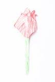 Tulip Royalty Free Stock Photography