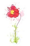 Tulip 2 Stock Photo