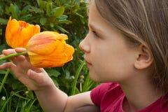 Tulip Fotos de Stock Royalty Free